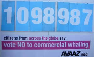 Avaaz